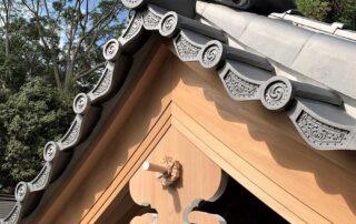 東田神明宮(神饌所 屋根葺き替え工事)002
